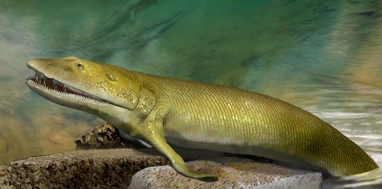 Ancient Fish Fossil Reveals Transitional Link From Fins To Hands