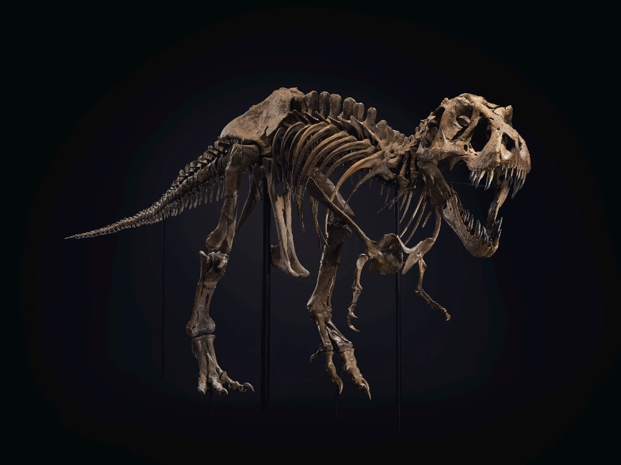 Meet Stan, The World's Most Expensive Tyrannosaurus Rex Fossil