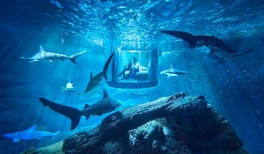 Airbnb-shark-aquarium-1-medium