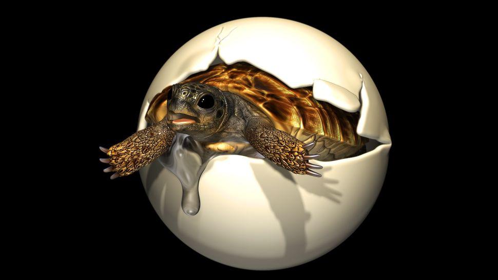 Rare Embryo Found Inside Prehistoric Turtle Egg